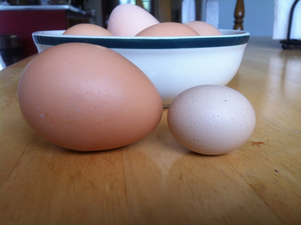Wind Egg